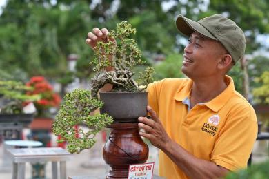 Triển lãm SVC huyện Mộ Đức - Quảng Ngãi