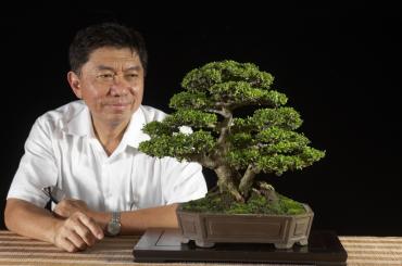 Nghệ Nhân Budi Sulistyo và cây Neea buxifolia