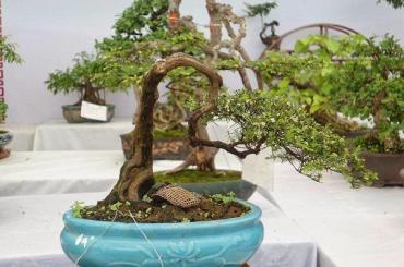 Làm cây theo phong cách tự nhiên (Phần 4)