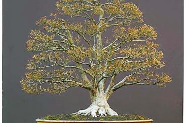 Làm cây theo phong cách tự nhiên (Phần 3)