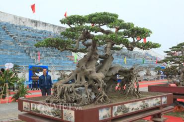 Tác phẩm Ngọa hổ tàng long của triệu phú đô la Phú Thọ