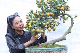 Tinh hoa Quất Việt