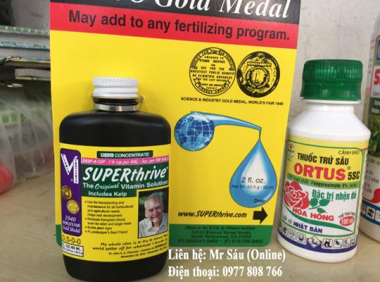 Thuốc kích thích tăng trưởng Superthrive cho thông