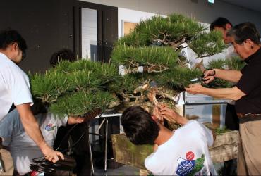Xem Nghệ nhân hàng đầu của Nhật Bản (Kunio Kobayashi) biểu diễn demo cây Thông đen Nhật